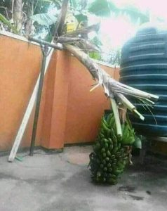Talkzone: As a child of God what would you do if you find this inside your compound (photo)